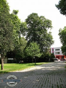 Tottenham-Green-Trees